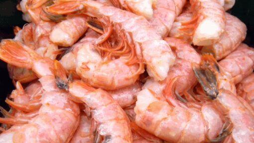 Pink Shrimp